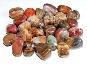 Highly polished Fossil Wood tumble stone size 2-3 cm.