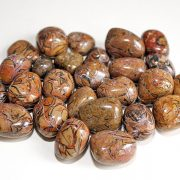 Highly polished Fossil Shell tumble stone size 2-3 cm.