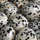 properties-jasper-dalmation